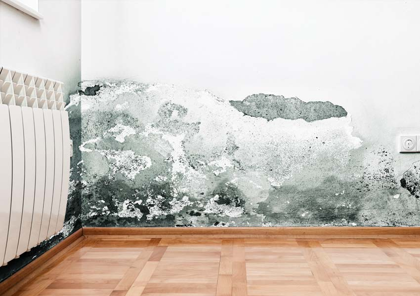 Mold Testing Image